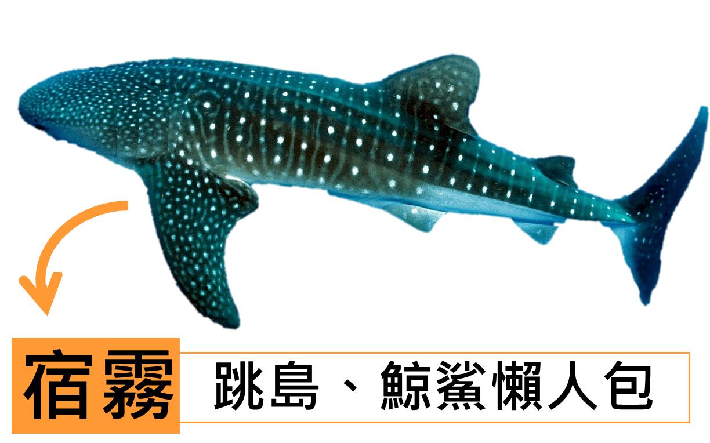 宿霧_跳島、鯨鯊旅遊規劃懶人包攻略