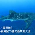 2020從宿霧、薄荷島到歐斯陸(Oslob)看鯨鯊五種交通攻略、費用介紹
